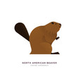 north american beaver isolated animal cartoon vector image