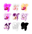 orchid phalaenopsis various colours natural vector image vector image