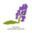 blue ginger tropical flower vector image vector image