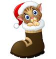 christmas kitten in santa boots vector image