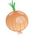 drawing of onion vector image vector image