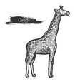 giraffe sketch zoo and african jungle wild animal vector image vector image