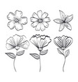 set flowers rustic and monochrome decoration vector image