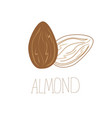delicious almond nuts hand drawn icon vector image vector image