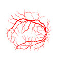 eye vein system x ray angiography design vector image