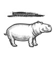 hippopotamus sketch african zoo wild vector image
