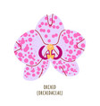 orchid tropical flower vector image vector image