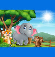 scene with different kind animal at open zoo vector image vector image