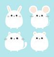 white bear mouse cat kitten kitty rabbit hare