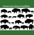 american bison buffalo silhouettes vector image vector image