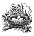 bird and nest vintage vector image vector image