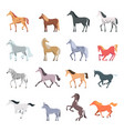 horse breeds strong beautiful domestic animals in vector image vector image