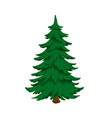 isolated image fir green pine in cartoon style vector image vector image