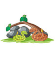 isolated picture snakes in garden vector image vector image