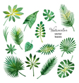 Set of watercolor green leaves vector image