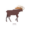 wild moose elk isolated animal cartoon vector image vector image