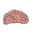 brain human organ part anatomy vector image