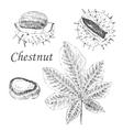 chestnut and leaf sketch set on white vector image