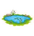 natural pond outdoor scene small blue decorative vector image vector image