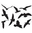 seagull set silhouettes on white background vector image vector image