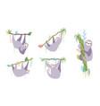 set of cute character sloth vector image