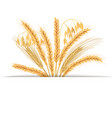 wheat barley oat and rye set four cereals vector image