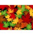 Maple leaves fall seamless pattern vector image