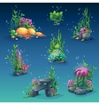 Collection of seaweed underwater vector image
