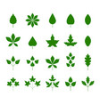 green leaf icons set on white background autumn vector image