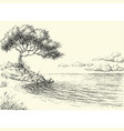 olive tree on sea shore drawing vector image