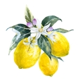 Watercolor lemons with flowers