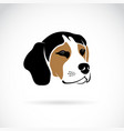 beagle dog head on white background pet animals vector image vector image