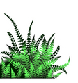 ferns vector image vector image