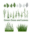 grass flowers and leaves vector image vector image