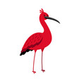 ibis red bird cartoon icon vector image