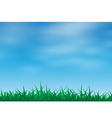 Green grass in a blue sky vector image vector image