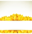 Sunflower on white background EPS 10 vector image vector image