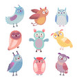 Cute woodland owls funny characters