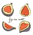 Hand drawn figs colorful set vector image vector image