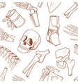 human bone background vector image vector image
