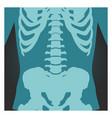 x-ray shot spinal column pelvis and rib cage vector image vector image