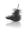 3d realistic falling black fluffy twirled vector image vector image