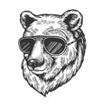 bear animal in sunglasses sketch engraving vector image vector image