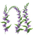 Bluebells vector image vector image
