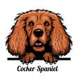 cocker spaniel - color peeking dogs - breed face vector image vector image