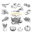 hand drawn sketch Harvest set vector image