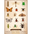 Insects Vintage Book Page vector image