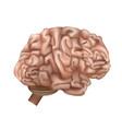 realistic detailed 3d human brain internal organ vector image vector image