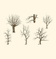 trunks trees set vector image vector image