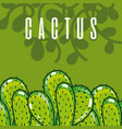 cactus green plant concept vector image vector image